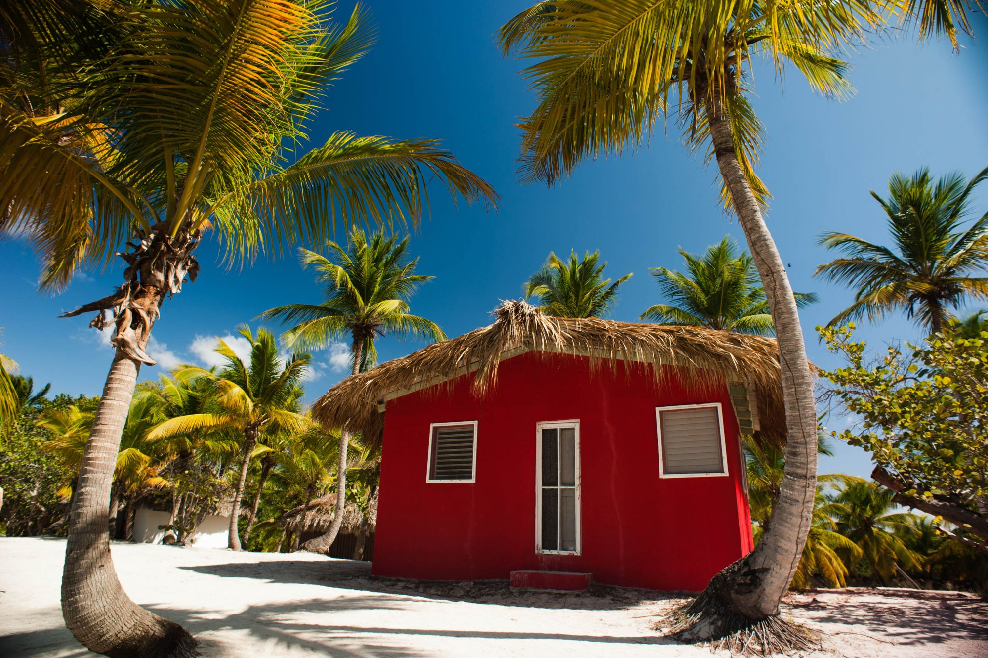 files/Rozdilu/Goteli Krajin/Dominicana/Banner/Catalina_Island,_La_Romana,_Dominican_Republic._A_typical_bungalow_nearby_cost_line,_shaded_with_palm_trees_(1).jpg